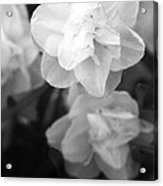 Tulips - Infrared 02 Acrylic Print