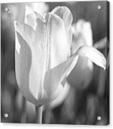 Tulips - Infrared 08 Acrylic Print