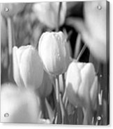 Tulips - Infrared 10 Acrylic Print