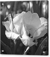 Tulips - Infrared 19 Acrylic Print