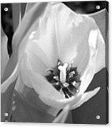 Tulips - Infrared 31 Acrylic Print