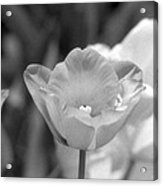 Tulips - Infrared 40 Acrylic Print
