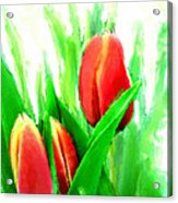 Tulips Acrylic Print by Moon Stumpp
