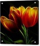 Tulips Of Light Acrylic Print