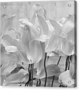 Tulips Oxford Acrylic Print