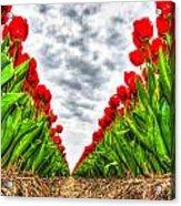 Tulips Part IIi Acrylic Print