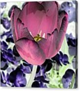 Tulips - Perfect Love - Photopower 2028 Acrylic Print