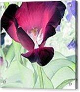 Tulips - Perfect Love - Photopower 2043 Acrylic Print