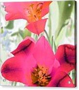 Tulips - Perfect Love - Photopower 2045 Acrylic Print