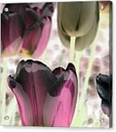Tulips - Perfect Love - Photopower 2066 Acrylic Print