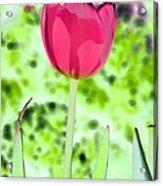 Tulips - Perfect Love - Photopower 2070 Acrylic Print