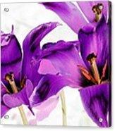 Tulips - Perfect Love - Photopower 2081 Acrylic Print