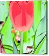 Tulips - Perfect Love - Photopower 2089 Acrylic Print
