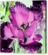 Tulips - Perfect Love - Photopower 2093 Acrylic Print
