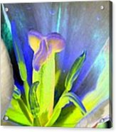 Tulips - Perfect Love - Photopower 2158 Acrylic Print