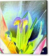 Tulips - Perfect Love - Photopower 2161 Acrylic Print