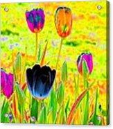 Tulips - Perfect Love - Photopower 2169 Acrylic Print