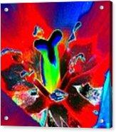 Tulips - Perfect Love - Photopower 2170 Acrylic Print