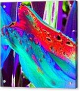 Tulips - Perfect Love - Photopower 2173 Acrylic Print
