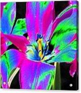 Tulips - Perfect Love - Photopower 2175 Acrylic Print