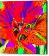 Tulips - Perfect Love - Photopower 2179 Acrylic Print