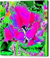 Tulips - Perfect Love - Photopower 2183 Acrylic Print