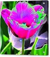 Tulips - Perfect Love - Photopower 2190 Acrylic Print