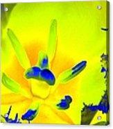 Tulips - Perfect Love - Photopower 2191 Acrylic Print