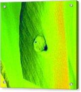 Tulips - Perfect Love - Photopower 2194 Acrylic Print