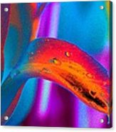 Tulips - Perfect Love - Photopower 2195 Acrylic Print