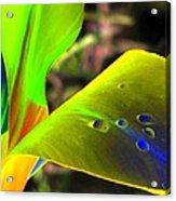 Tulips - Perfect Love - Photopower 2196 Acrylic Print