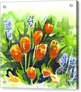 Tulips With Blue Grape Hyacinths Explosion Acrylic Print
