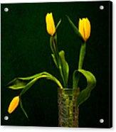 Tulips - Yellow On Green Acrylic Print
