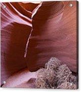 Tumbleweed In The Canyon Acrylic Print