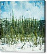 Tundra Forest Acrylic Print by Priska Wettstein