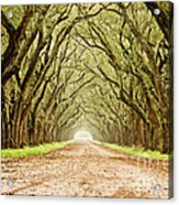 Tunnel In The Trees Acrylic Print