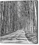 Tunnel Of Trees Black And White Acrylic Print