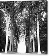 Tunnel Of Trees Acrylic Print