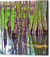 Tupelo/cypress Swamp Reflection At Mile 122 Of Natchez Trace Parkway-mississippi Acrylic Print