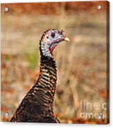 Turkey Profile Acrylic Print