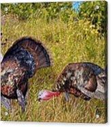 Turkey Terrain Acrylic Print