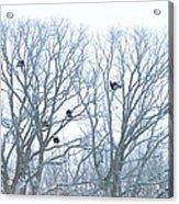 Turkey Tree Acrylic Print