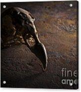 Turkey Vulture Skull On Slate Acrylic Print