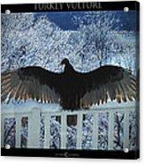 Turkey Vulture Sunning Acrylic Print
