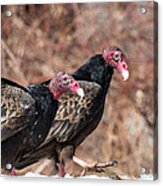 Turkey Vultures Square Acrylic Print