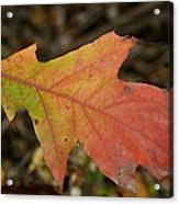 Turn A Leaf Acrylic Print