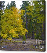 Turning For Autumn Acrylic Print