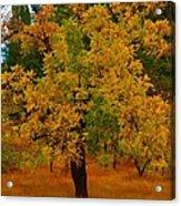 Turning Into Autumn Acrylic Print