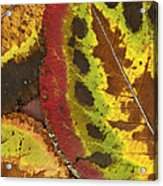 Turning Leaves 3 Acrylic Print