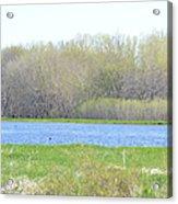 Turquoise Marsh Acrylic Print